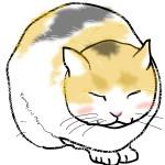 ノラ猫イメージ