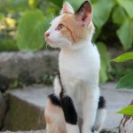 猫 イメージ