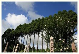 千葉ペット霊園 個別墓 イメージ